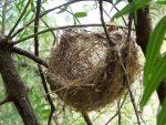 """Pregnant women really do """"nest"""""""